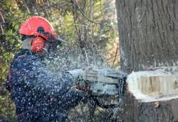 Dangerous Tree Removal Service in Atlanta