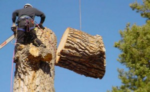 Tree Cutting and Stump Removal Service in Atlanta